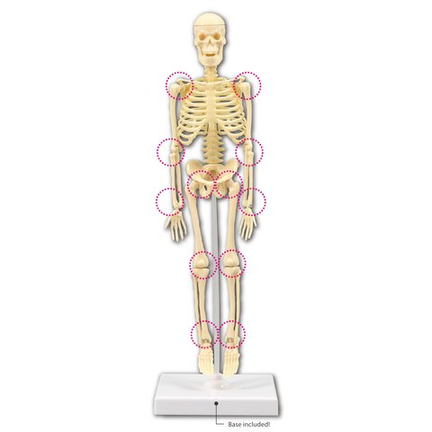 Artec Bone Assembly